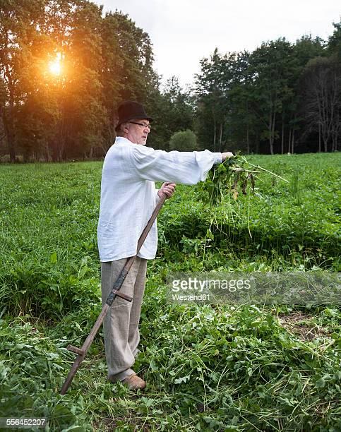 Estonia, farmer cutting grass with a scythe