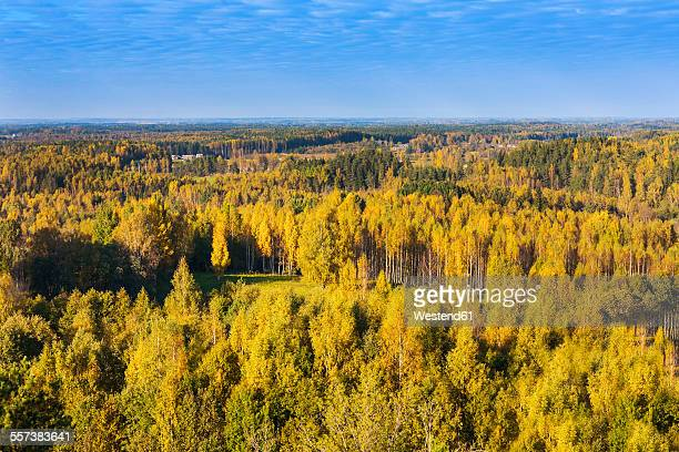 Estonia, Voru county, view from Maeekonnu tower to colorful trees