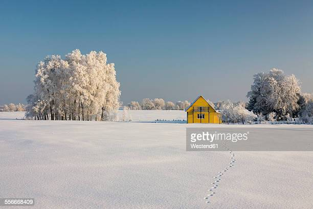 estonia, yellow wooden house in snowy landscape - estonia stock photos and pictures