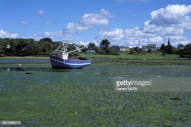 Etel river, fishing boat at low tide, green algae, Brittany, France.