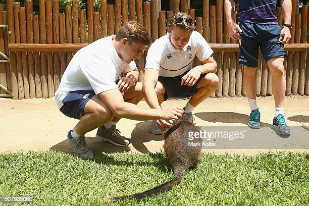 Ethan Waddleton and Harry Glover of England pet a wallaby during a Rugby Sevens media opportunity at Taronga Zoo on February 2 2016 in Sydney...