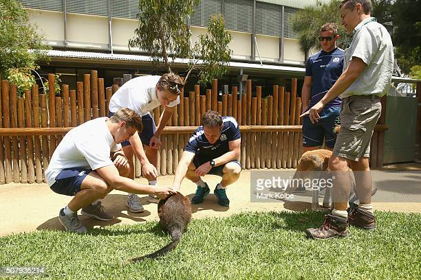 Ethan Waddleton and Harry Glover of England Scott Riddell and Mark Robinson of Scotland pet a wallaby as keeper Simon Brown speaks to them about...