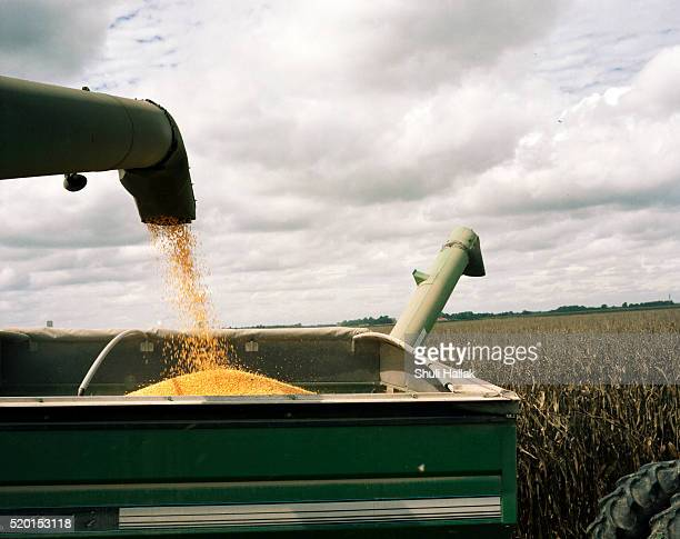 ethanol harvest - combine harvester stock pictures, royalty-free photos & images