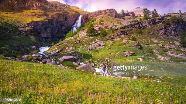 cascate eteree e prati di fiori selvatici in primavera - alpi del gran paradiso - italia - parco nazionale del gran paradiso foto e immagini stock