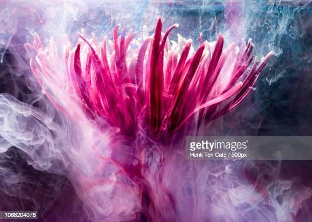 ethereal luminous flower - paranormal photos et images de collection
