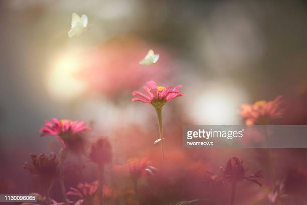 ethereal summer spring flowers and butterfly image. - macro animal photos et images de collection