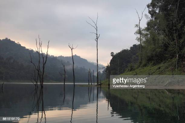 ethereal sunrise scene at cheow lan lake, trees coming out of water, thailand - argenberg ストックフォトと画像