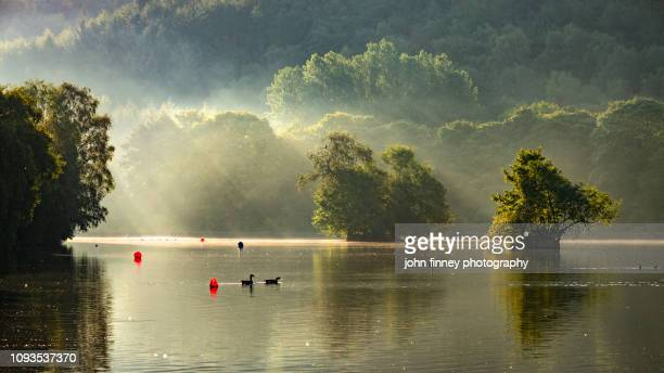 etherow country park, stockport, cheshire, uk - duck bird stock photos and pictures
