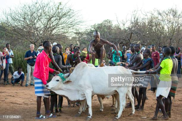 ethiopia: bull jumping ceremony - hamer tribe stock pictures, royalty-free photos & images