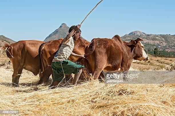 Ethiopian farmer boy is winnowing chaff from grain