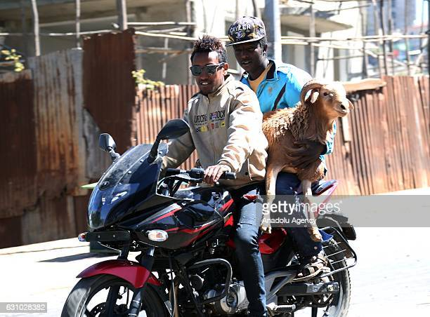 Ethiopian men carry a goat on a motorcycle during the preparations of Christmas at Asko Market in Addis Ababa, Ethiopia on January 5, 2017. Ethiopian...