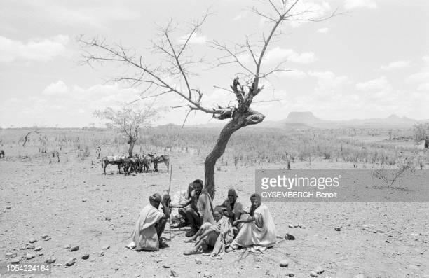 Ethiopie mai 1983 La population de la province de Gondar touchée par la famine Ici à Zui Humussit un groupe d'hommes assis au pied d'un arbre mort...