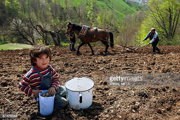 Ethnic Albanians work in their field 26 April 2006 as the Prime Minister Agim Ceku visited the bordered village of Debelde in the verge of his first...