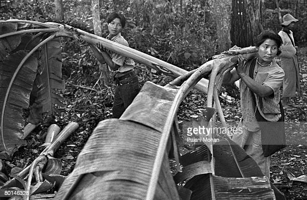 Ethnic Karen people gather banana leaves for a young elephant being broken in in the jungles of the ThaiBurma border April 2002 in Umpang Thailand...