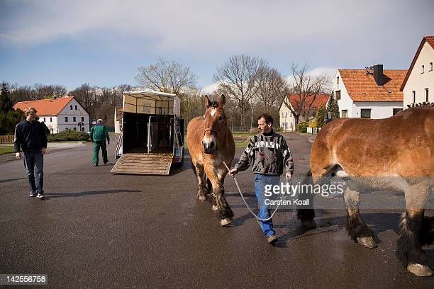 Ethnic Sorbian Andreas Kretschmer brings a horse from a lorry to the stall in preparation for the Easter riders procession April 7 2012 in...