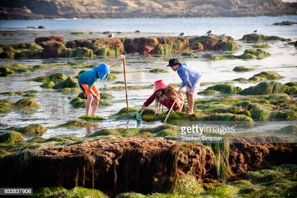 Ethnically diverse children explore tide pools with net and hats