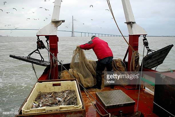 Etienne Bouche shrimp fisherman in Honfleur in the estuary of the Seine River at the bottom of the Normandy Bridge on the boat called 'Coeur de...