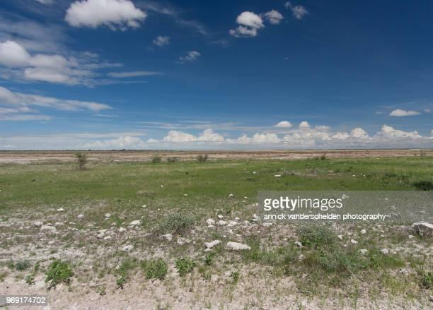 etosha pan - 荒野 ストックフォトと画像