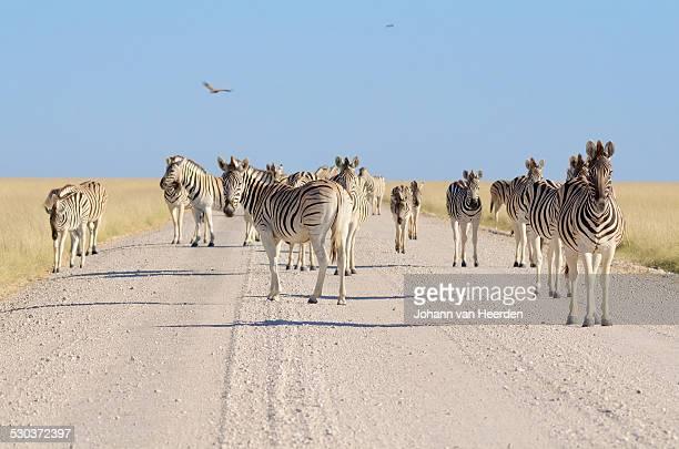 Etosha traffic jam