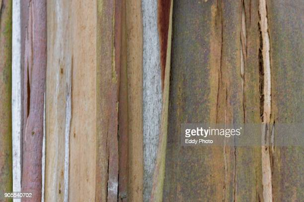 eucalypts tree texture - antique stock pictures, royalty-free photos & images