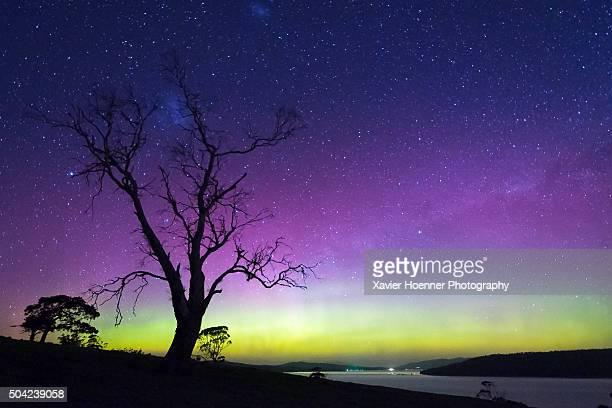 Eucalyptus and aurora
