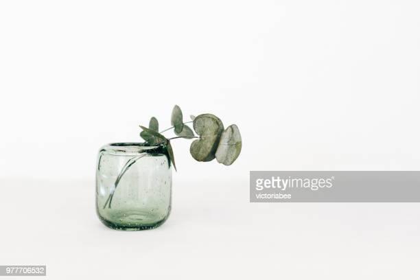 eucalyptus in a glass vase - 一つ ストックフォトと画像