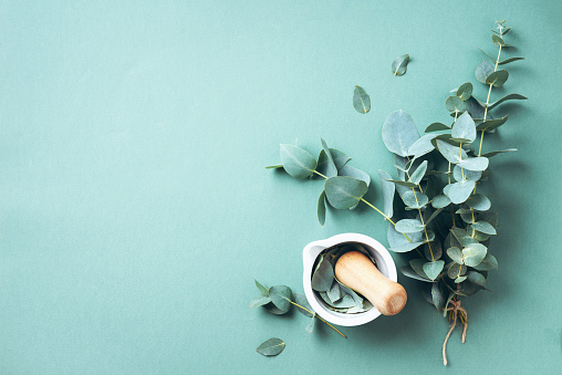 Eucalyptus leaves and white mortar, pestle. Ingredients for alternative medicine and natural cosmetics. Beauty, spa concept 1166945394