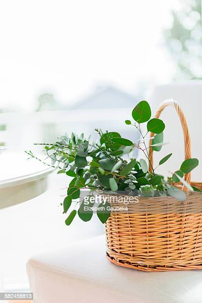 eucalyptus leaves in a basket - eucalyptus tree stock pictures, royalty-free photos & images