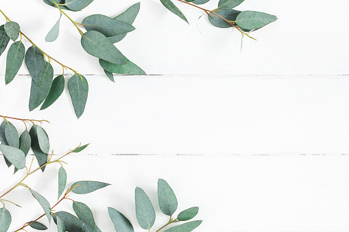 Eucalyptus leaves on white background. Flat lay, top view 917171252