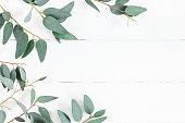 https://www.istockphoto.com/photo/eucalyptus-leaves-on-white-background-flat-lay-top-view-gm917171252-252335861