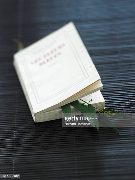 Eucalyptus stalk between pages of book
