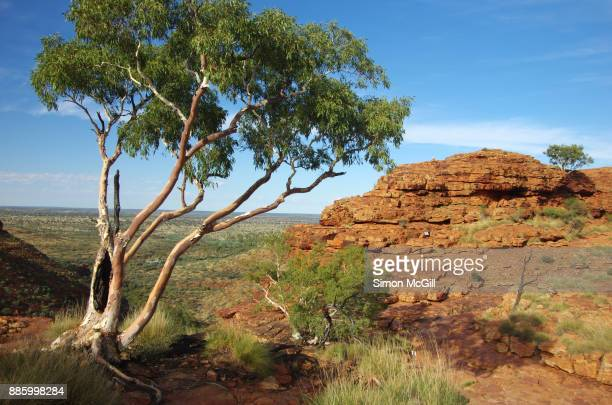Eucalyptus tree grows on the cliff top near the Mereenie sandstone domes on the route of the Rim Walk at Kings Canyon, Watarrka National Park, Northern Territory, Australia