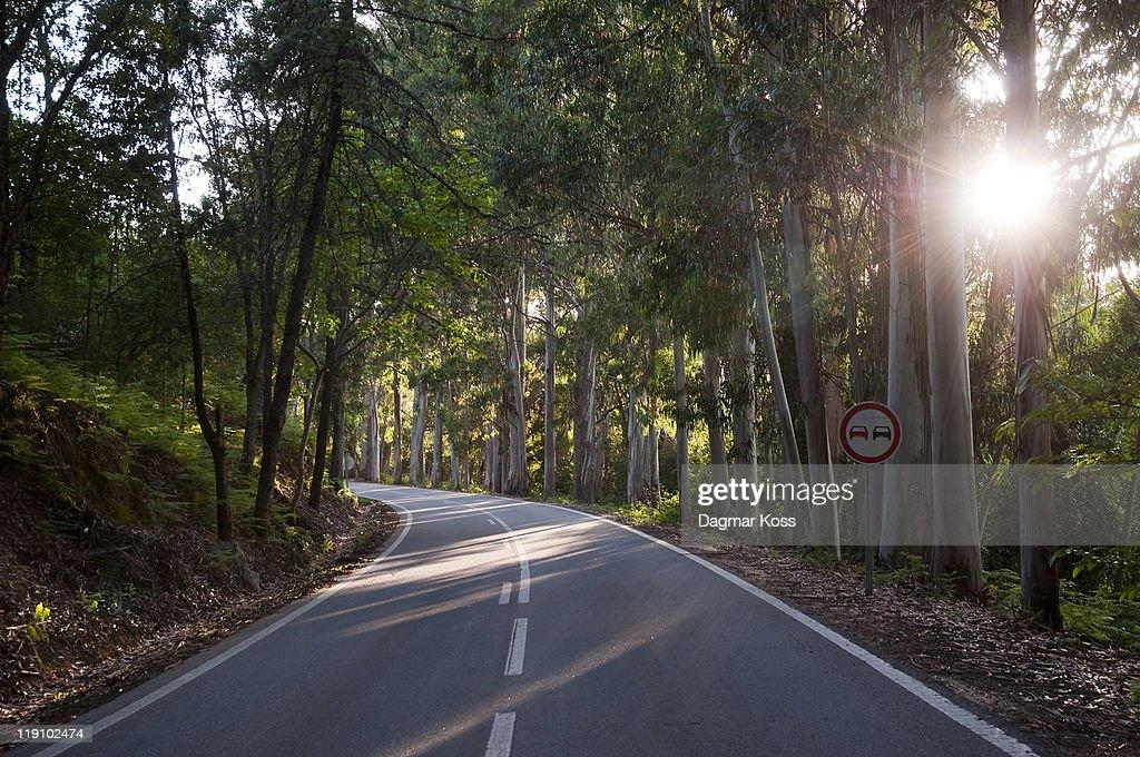 Eucalyptus trees next to road with sun shining : ストックフォト