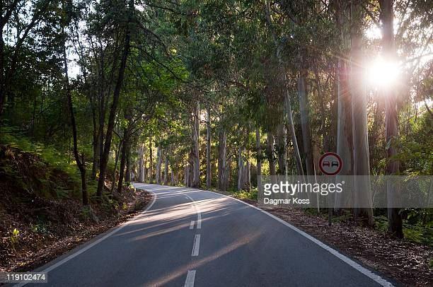 eucalyptus trees next to road with sun shining - monchique stock pictures, royalty-free photos & images