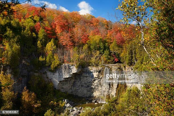eugenia falls - escarpment stock pictures, royalty-free photos & images