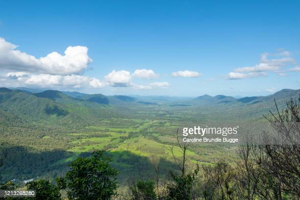 eungella national park, queensland, australia - duck billed platypus stock pictures, royalty-free photos & images