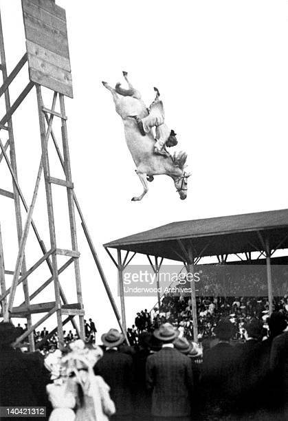 Eunice Padfield and her horse thrill the holiday crowd as they plunge from a high platform into a pool of water below Pueblo Colorado July 4 1905