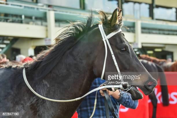 Eurack after winning the Comcater Handicap at Ladbrokes Park Hillside Racecourse on July 26 2017 in Springvale Australia
