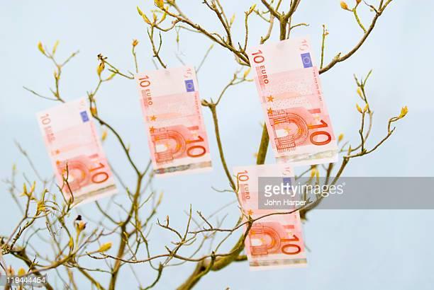 Euro money growing on tree.