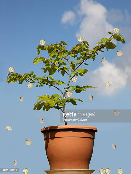 Euro money tree against a blue sky.