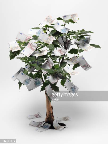 euro money tree - money tree stock photos and pictures