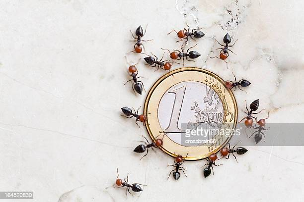 eurocrisis concept ants saving euro coin