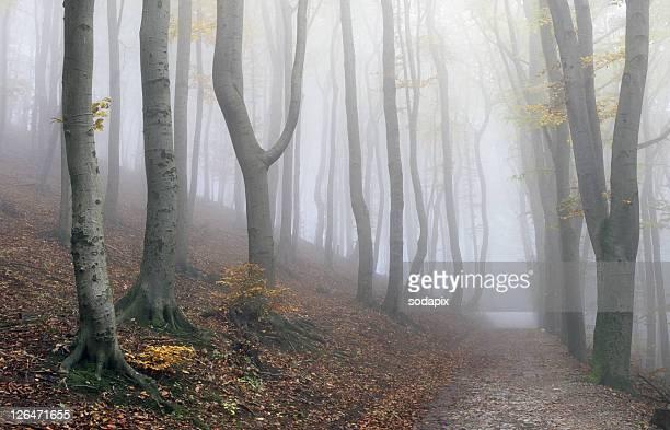 europa, austria, wien, wienerwald, herbstlicher wald - wald stock pictures, royalty-free photos & images