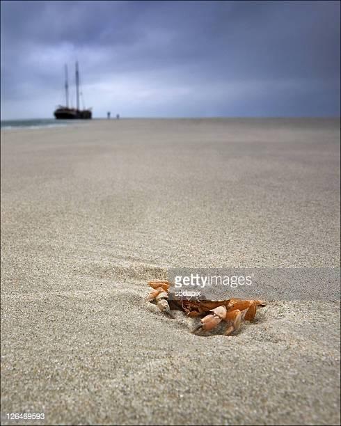 Europa, Holland, Krabbe am Strand der Nordsee mit einem Schiff im Hintergrund