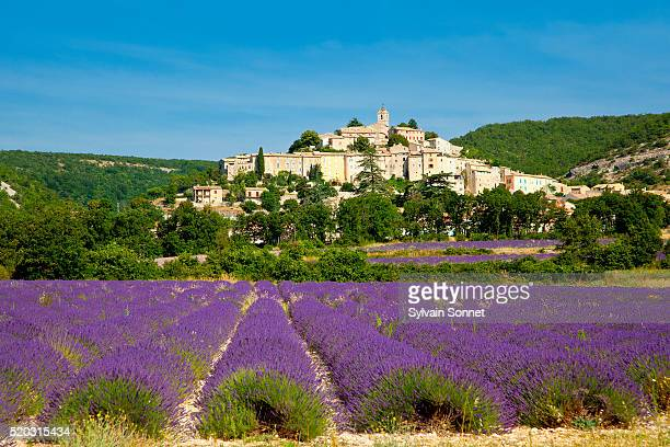 Europe, France, Alpes-de-Haute-Provence, Lavender field in front of Banon