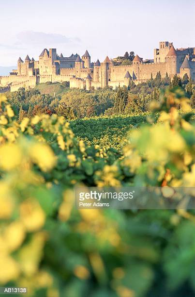 Europe, France, Carcossone, vineyards and estate (selective focus)