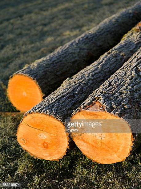 Europe, Germany, Bavaria, View Of Freshly Cut Trees To Be Used As Firewood