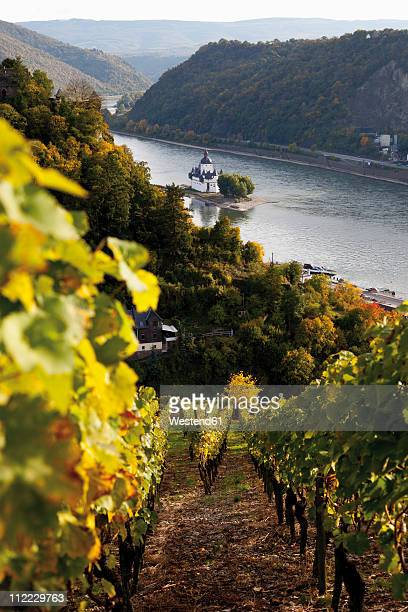 Europe, Germany, Rhineland-Palatinate, VIew of pfalz castle from vineyards