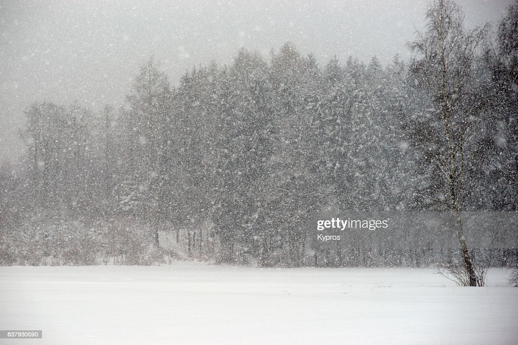 Europe, Germany, Winter View Of Snow Covered Forest Trees : Foto de stock