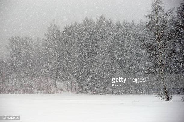 Europe, Germany, Winter View Of Snow Covered Forest Trees
